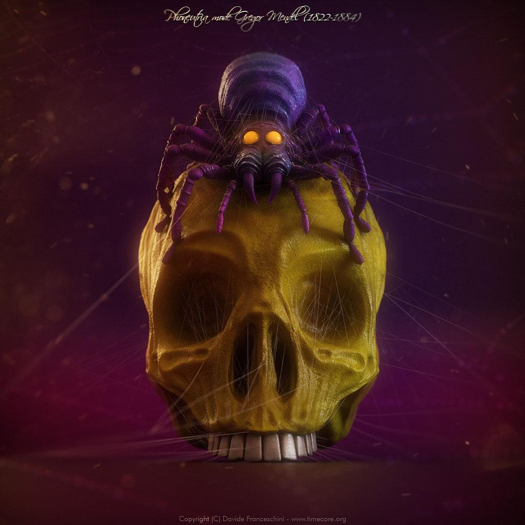 spider skull 01