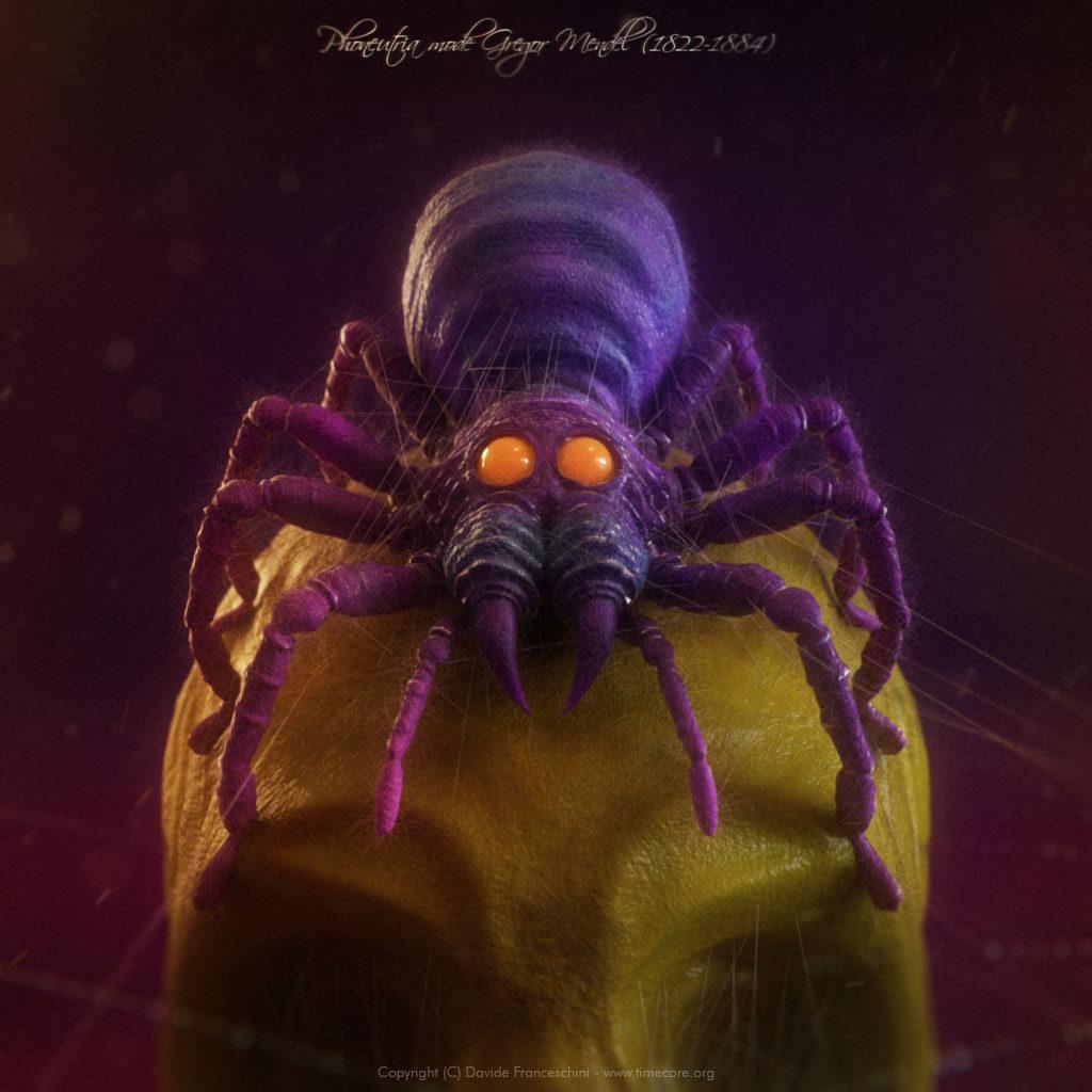 spider skull 02