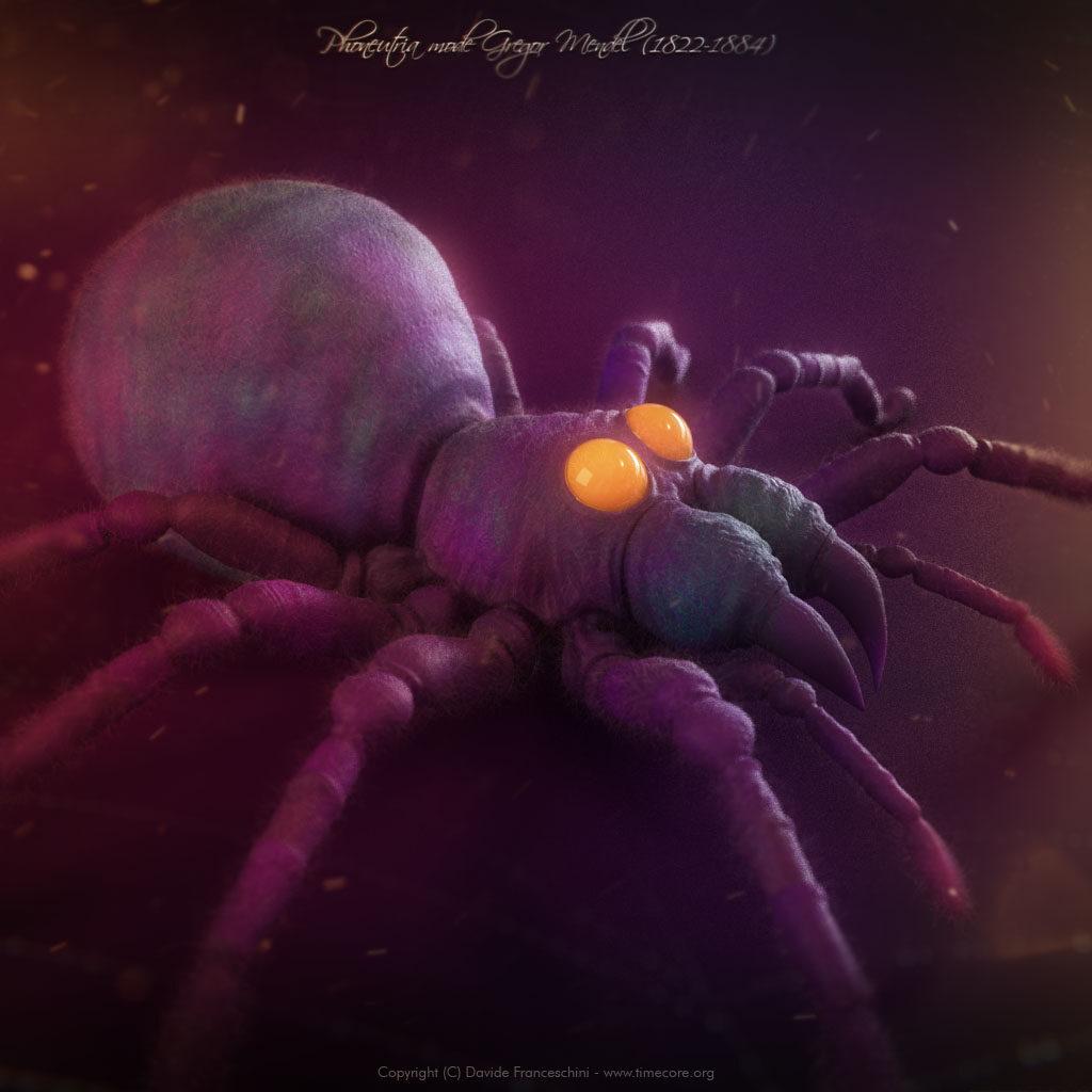 spider skull 04