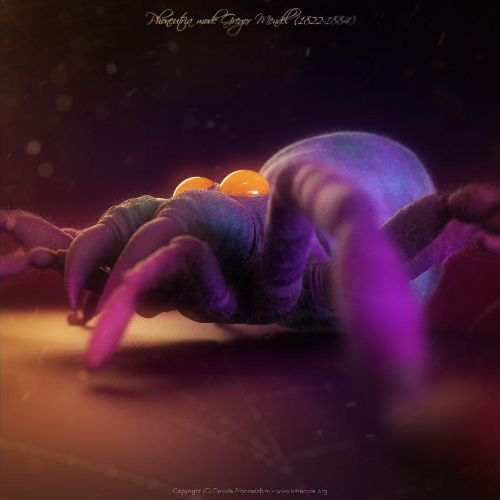 spider skull 05