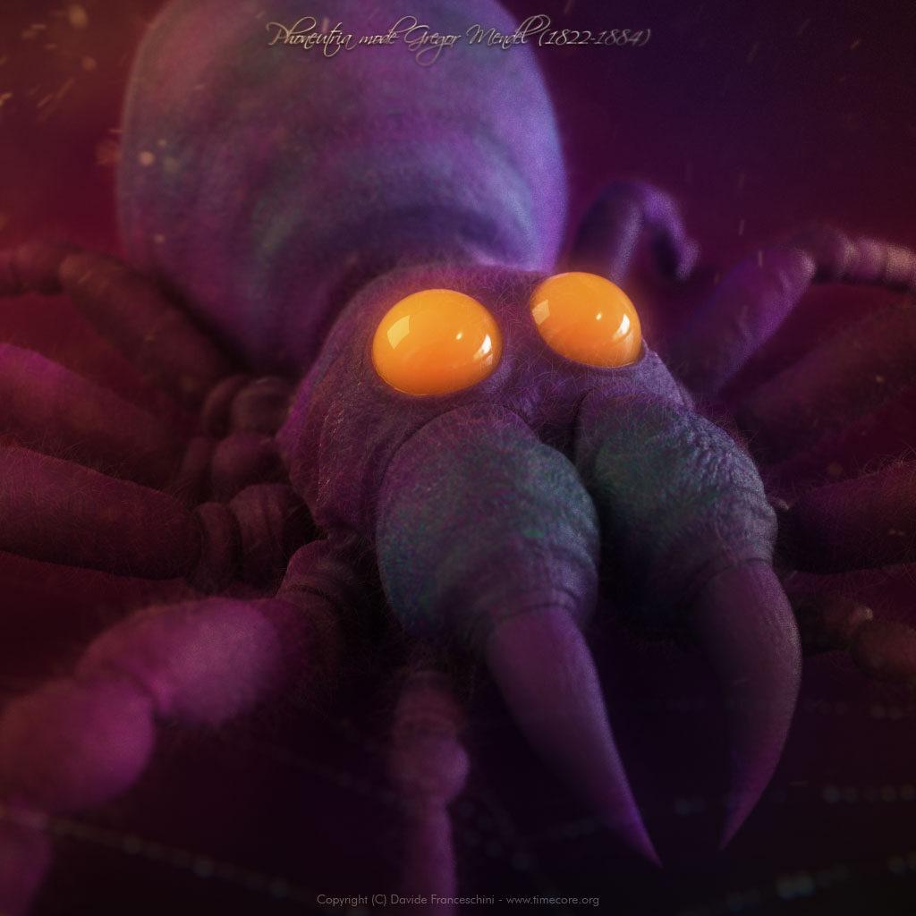 spider skull 06