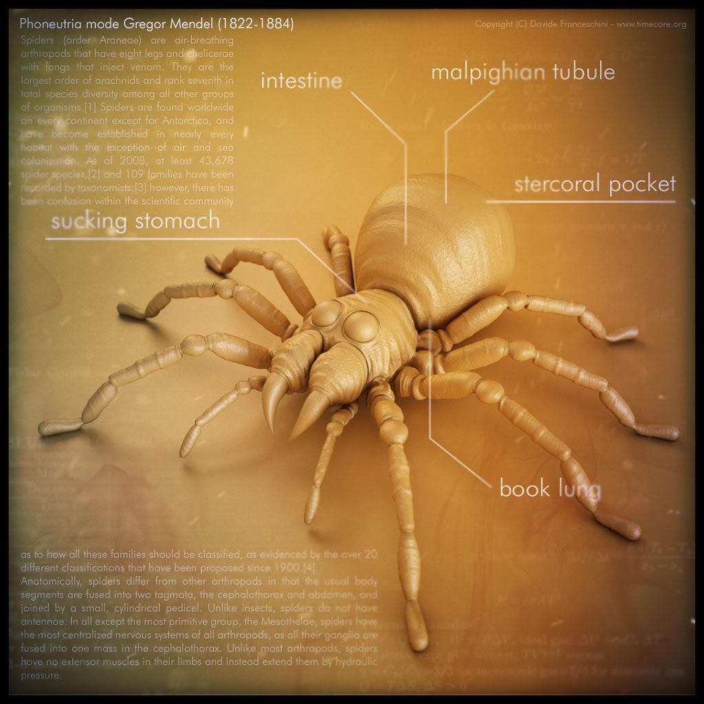 spider skull 07