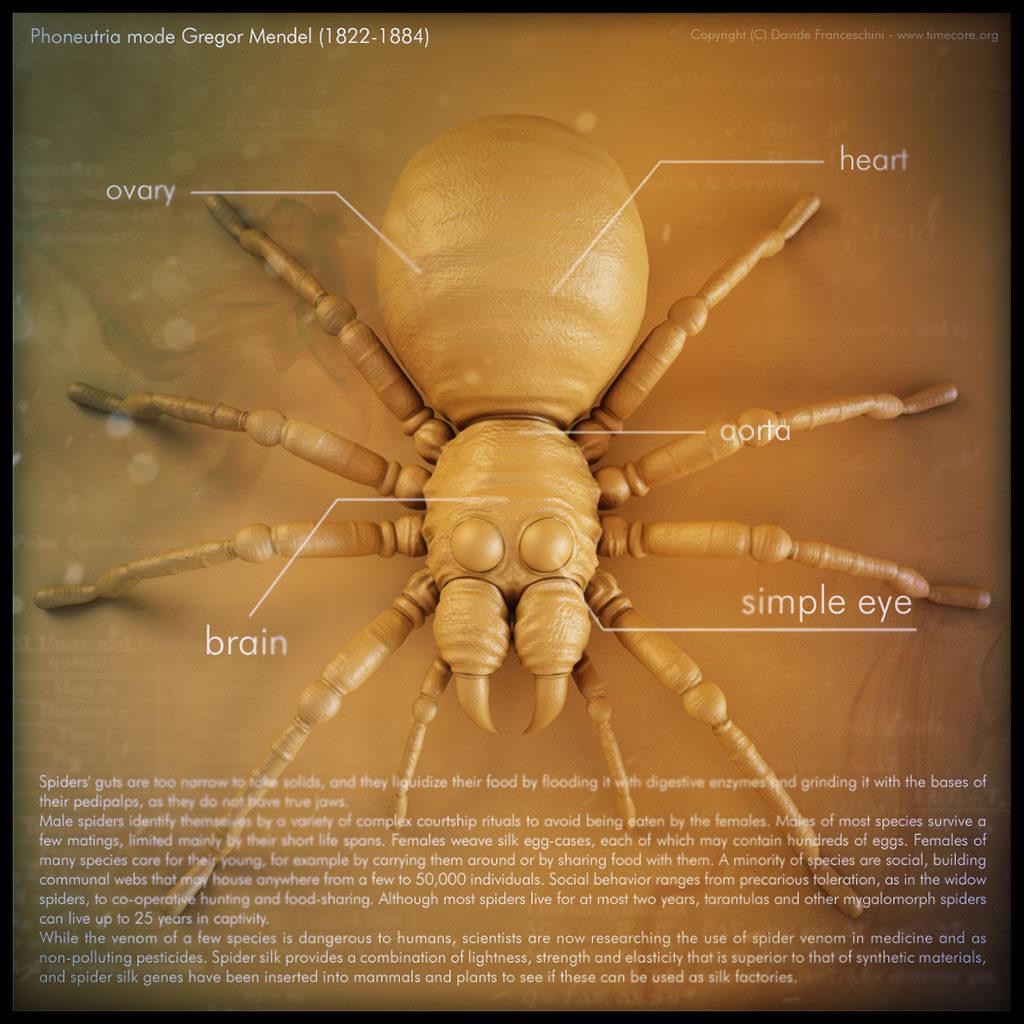 spider skull 10
